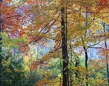 Cedar Pond by Ed Monnelly