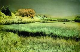 The Creek by Elizabeth J. Holmes