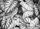 White Leaves by Beth Forman