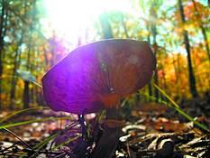Angry Mushroom by Derek Tyrone McClure