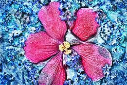 Summer Frost Begonia by Thomas Belkakis