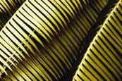 Palm Leaves by Ron Colbroth
