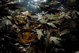 Leaves by Max Patrick Haynes