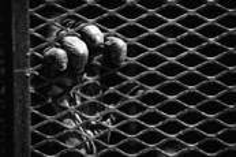 Caged Chimp by Rodger E. Overholser