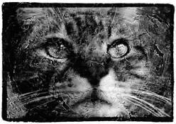 Cat Face by Wu Yi-Ping