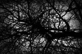 Winter Tree by Patricia Sweeney