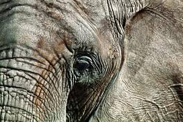 Elefante by Alejandro Aldaco