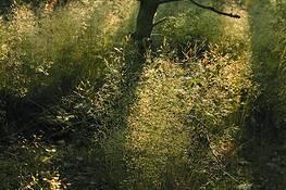 Twilight in the Wood by Sophia Koopman