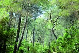 Forest by Maaike van Oorschot