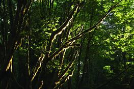 Moss onTtrees by John Walter Barker