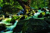 Spring Runoff by Dennis Fritsche