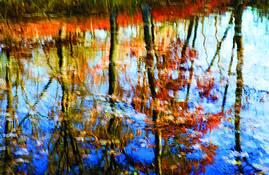 Shimmer by Joanne Scherf