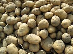 Potatoes by Virginia S. Metevia