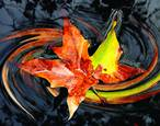 Leaf in Water by Ron Regalado