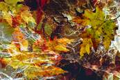 Fall Leaves 2 by Rosanne Mezio
