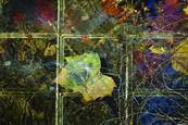 Fall Leaves 3 by Rosanne Mezio