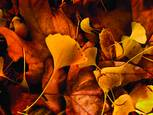 Fall at Scripps College by Marilynn Waters