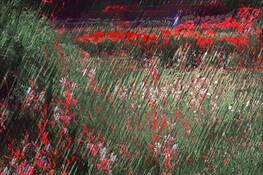 Botanical Gardens by Iva Nash