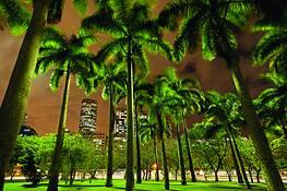 Downtown Palm Trees by Eduardo Garcia