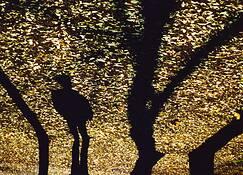 Shadows by Alexander Tkachev