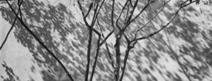Tree Shadows by Dorin Todor