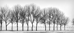 Fourteen Trees by Chuck Kimmerle
