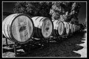 Becker Vineyards by Dean Fikar