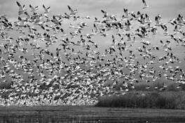 The Flight by Jane E. Kim