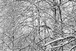 Winter by Ryan Watkins