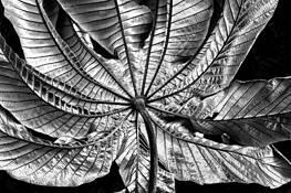 Silver Leaf by Ken Goodrich