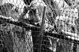 The Fence by Diane DeQuevedo
