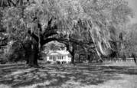 Old House Plantation by Robert Weissman