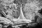 Tree Root by Scott Taylor