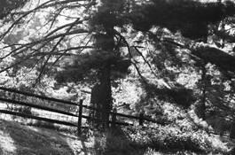 Summer Tree by John Gribbin