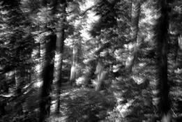 Tree Flash by Jacqui L. Franks