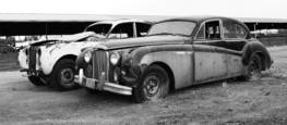 Two Old Jaguars Awaiting Cosmetic Surgery by Marshall Gould