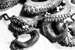 Late Octopi 6 by Joel Kubicki Jr.