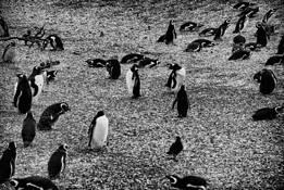 Pinguin Island 1 by Nataly Rader