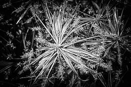 Botanical #3 by Allan R. Lamb