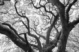Ancient Woodlands MCV by Michael Hudson