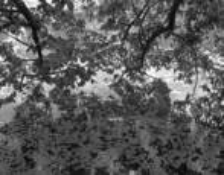 Reflection-1 by Mitsu Yoshikawa