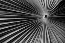 Fan Palm 2 by Scott Hoyle