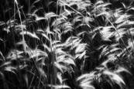 Ferns by Rafael Padilla