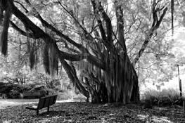 Haunted-tree by Dominic Martello