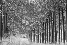 Trees No. 5 by Mira Gafney