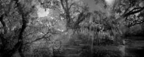 Spanish Moss and Oak Veins by Rebecca McNeill Meyers