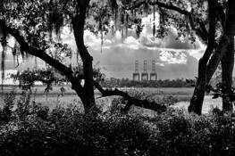 Distant Cranes by Fred De Filippo