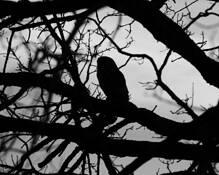 Wise Old Owl by John Bayler