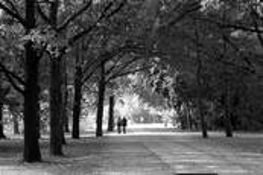 The Stroll by Randall Howlett