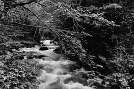 Cascades 4 by George T. Grubb